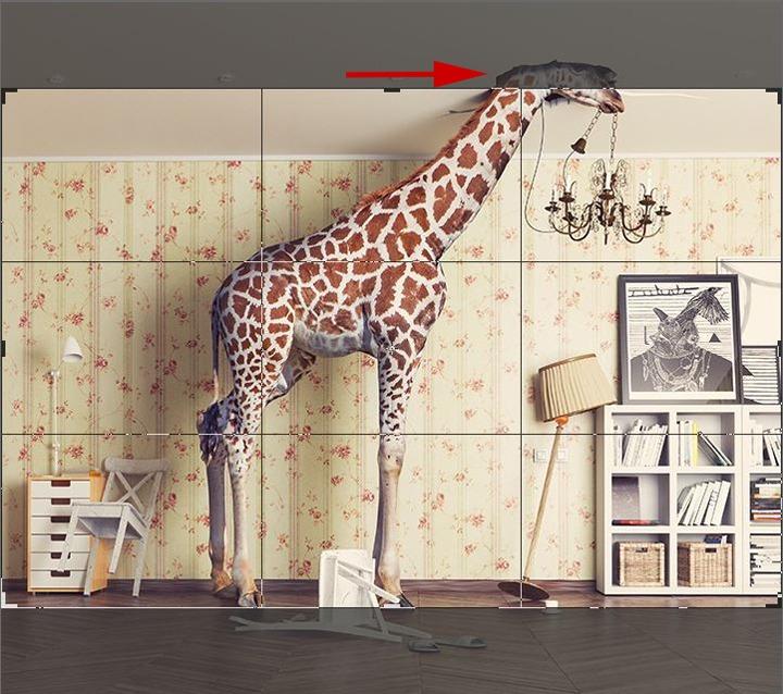 Foto Giraffe abgeschnitten