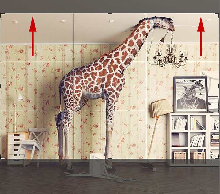 Foto Giraffe zuschneiden