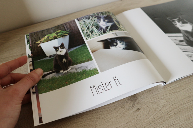 Livre photo chat