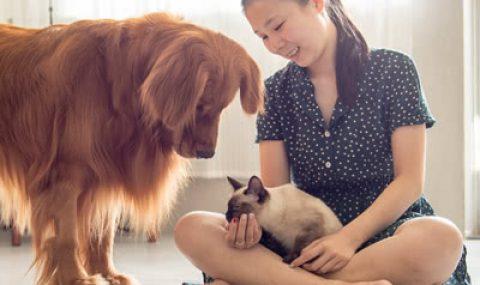 Chouchoute ton animal de compagnie pour la Journée mondiale des animaux!