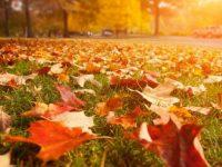 7x de mooiste herfstfoto's maken!