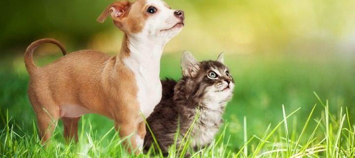 Zet je huisdier in de spotlight op Werelddierendag!