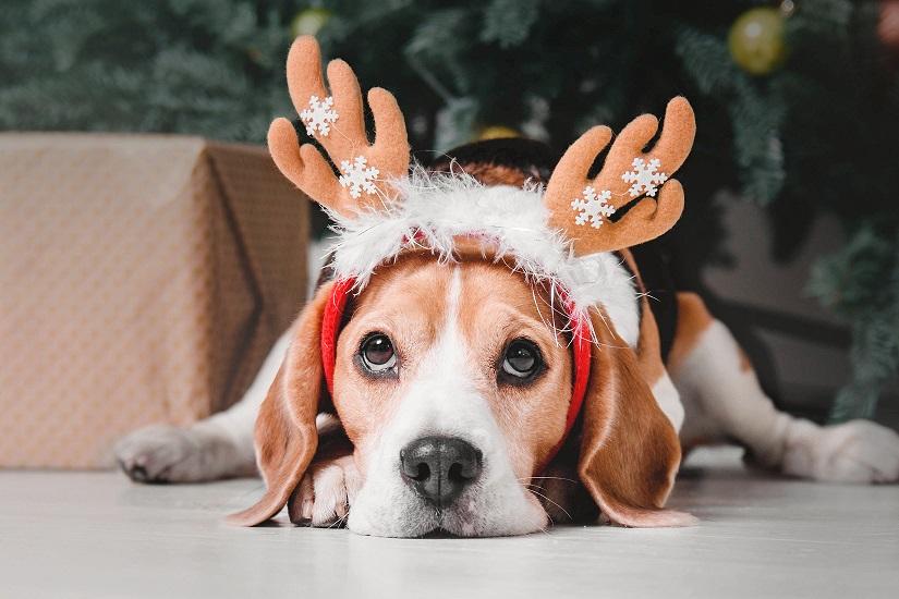 Kerstgevoel