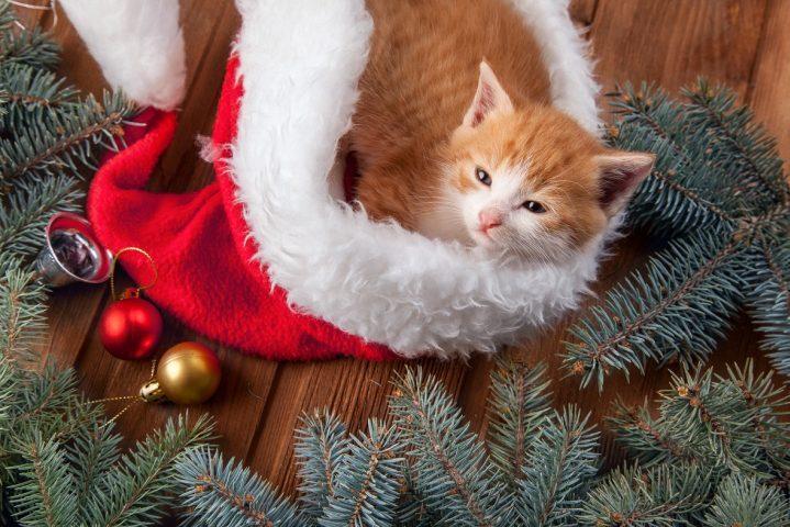 kerstkaart maken huisdier