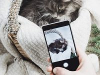 Je huisdier fotograferen en mooi op de foto krijgen doe je zo!