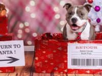 Leuke kerstkaart ideetjes met je hond in de hoofdrol
