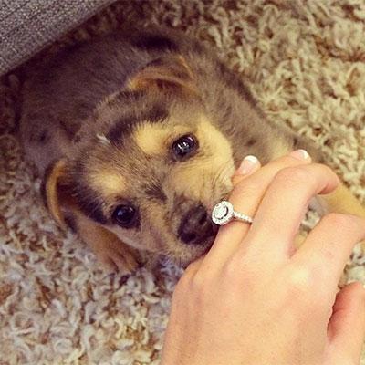 Huwelijksaankondiging-Puppy love