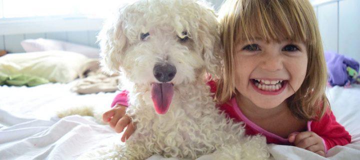 5 niet te missen cadeaus om je huisdier te vertroetelen