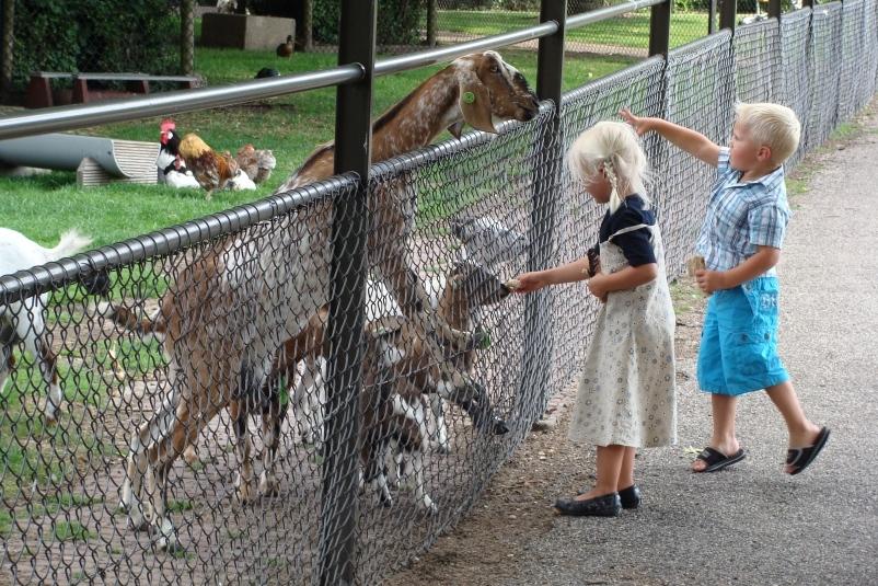 zomeractiviteiten voor kinderen kinderboerderij