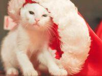 Overlevingstips voor de feestdagen? Check!
