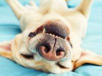 Zet je huisdier in de spotlight op Werelddierendag