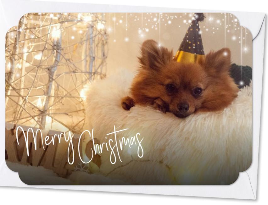 Hond in kerstoutift
