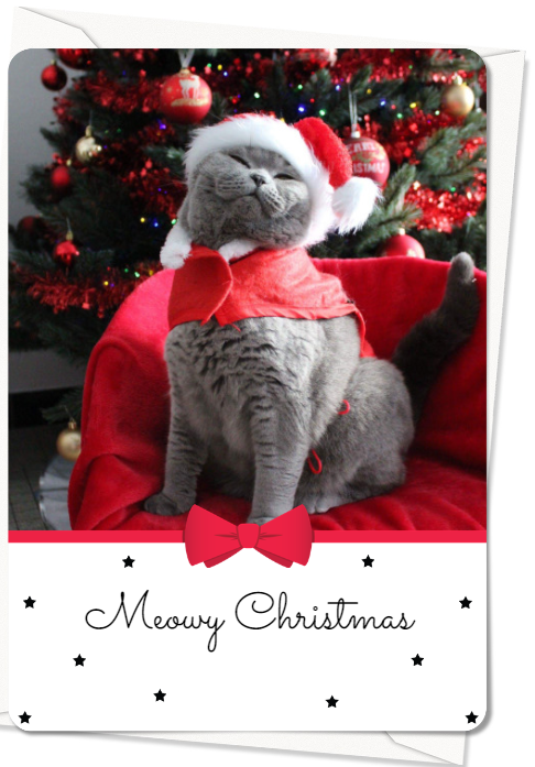 Kat in kerstoutfit