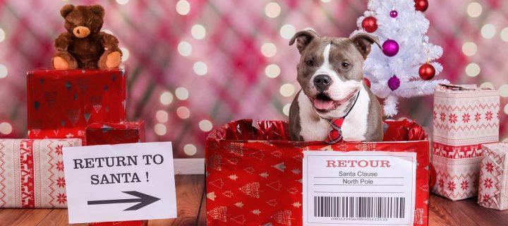 Woofy Christmas! Leuke kerstkaart ideetjes met je hond in de hoofdrol