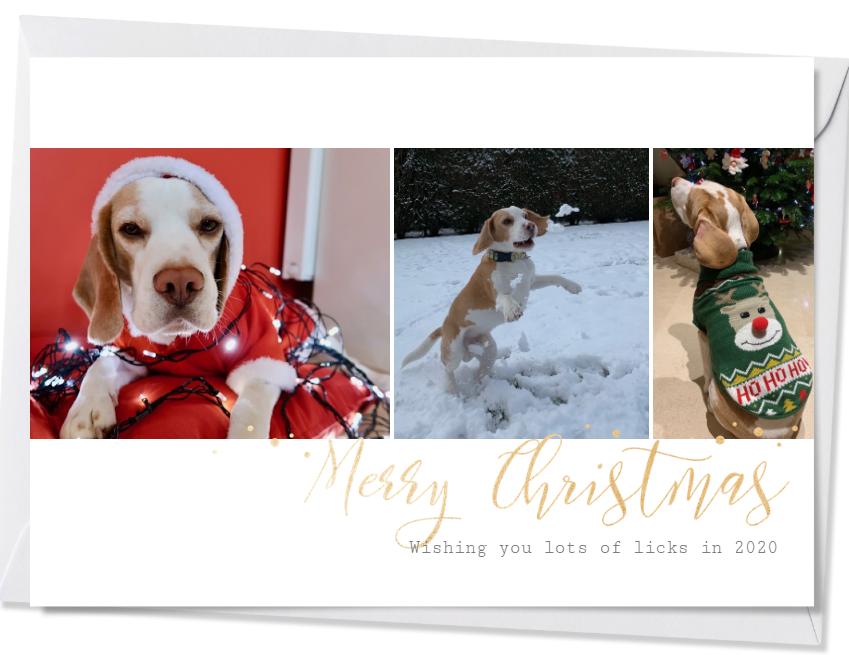 Hond in kersttrui/sneeuw