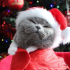 Meowy Christmas! Leuke kerstkaart ideetjes met je kat in de hoofdrol