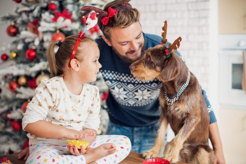 Hond in kerstsfeer