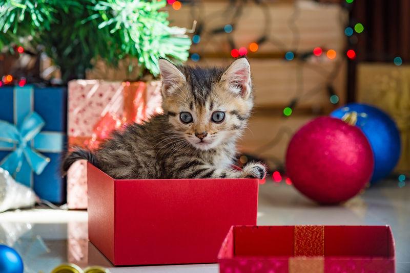 Découvrez nos conseils pour fêter Noël en 2020 : On offre des cadeaux plein d'amour !