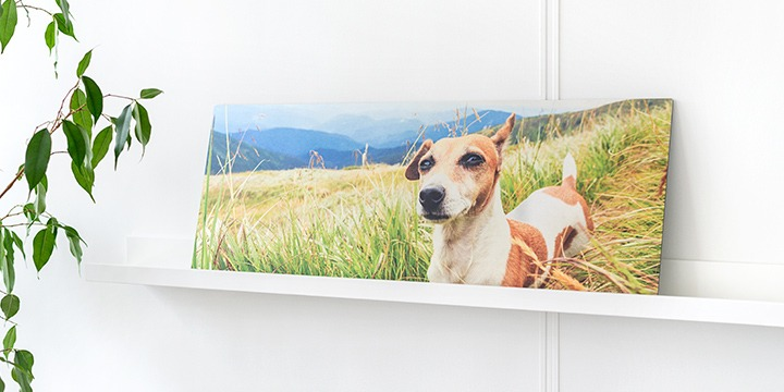 Panoramic photo on brushed metal with dog in nature
