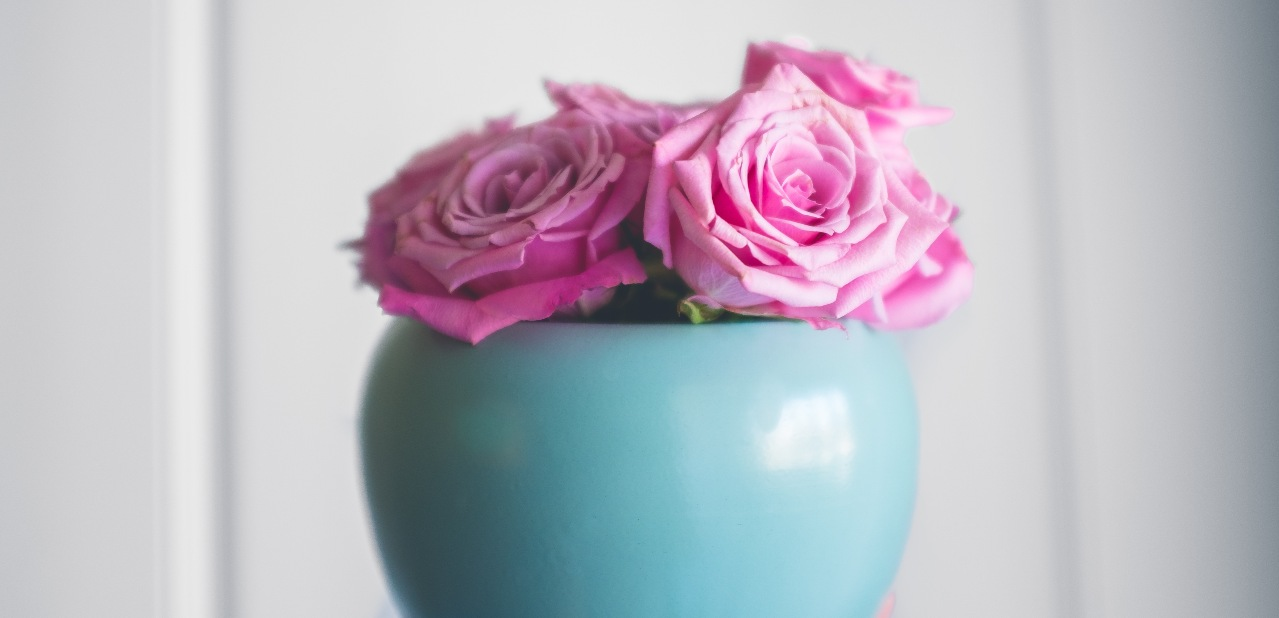 Des fleurs pour maman: le rosier, soins et floraison