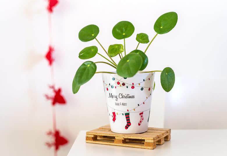 Cadeau de noël de dernière minute  pot de fleurs personnalisé en céramique
