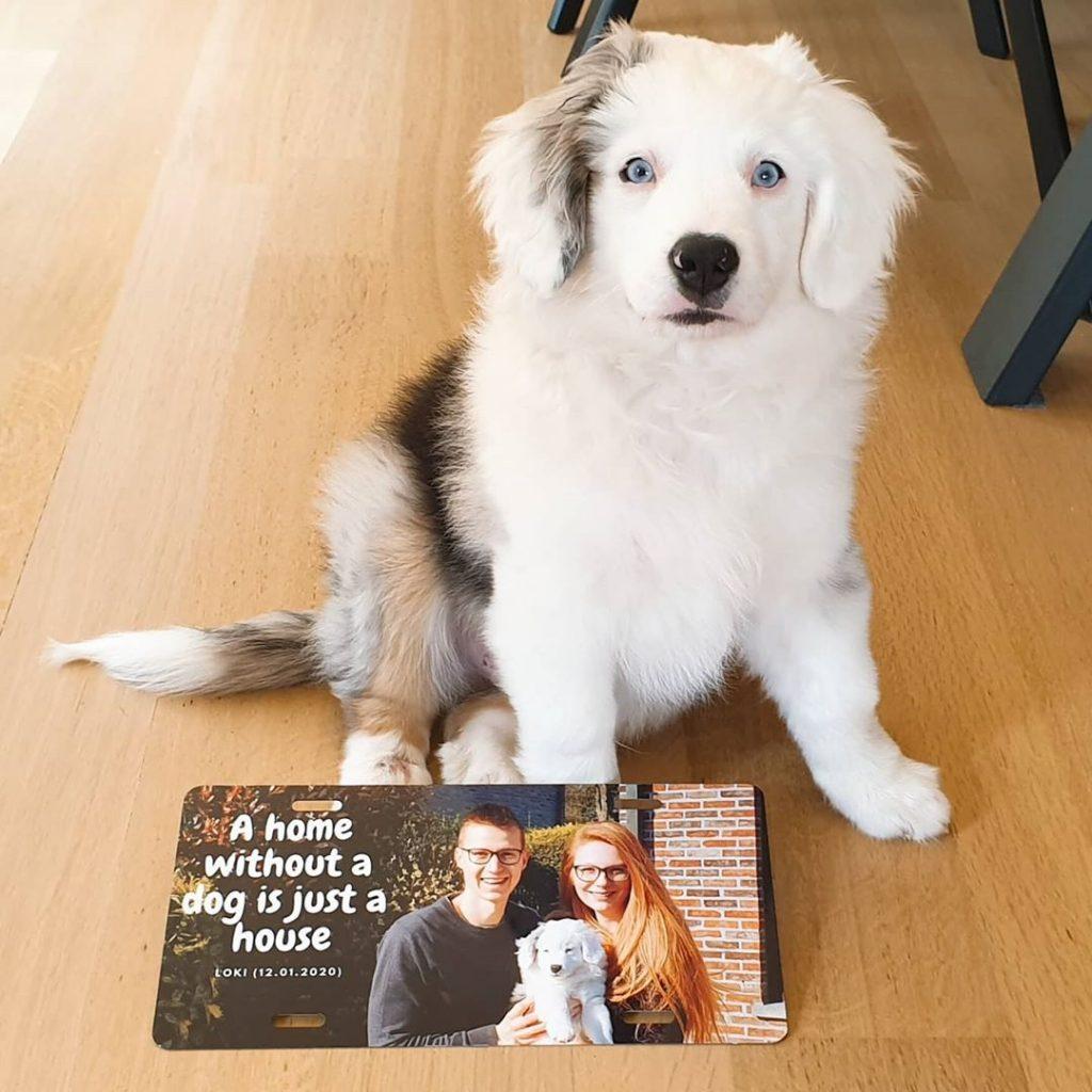 Idée créative confinement - plaque de porte chien mignon