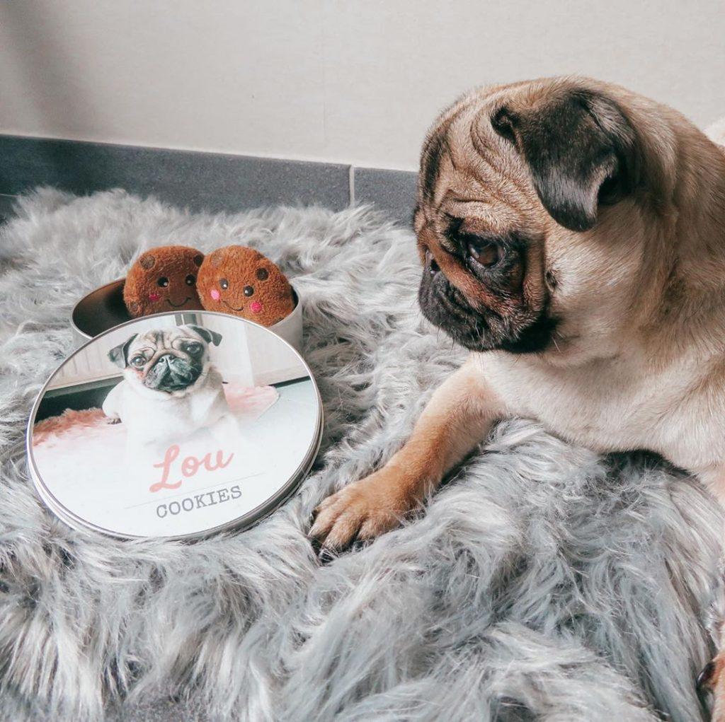 idee photo animal de compagnie : Boîte à friandises pour chien personnalisée, smartphoto - création et photo de @littlelouthepug sur instagram