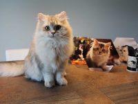 Chat en jette ! 10 idées pour les plus belles photos de votre animal