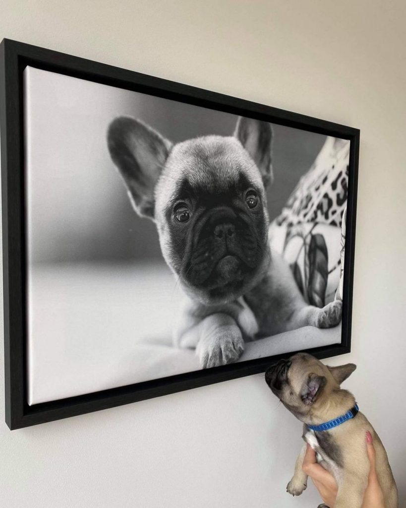 idee photo animal de compagnie : Toile photo encadrée par smartphoto - création et photo de umi_the_frenchie sur instagram