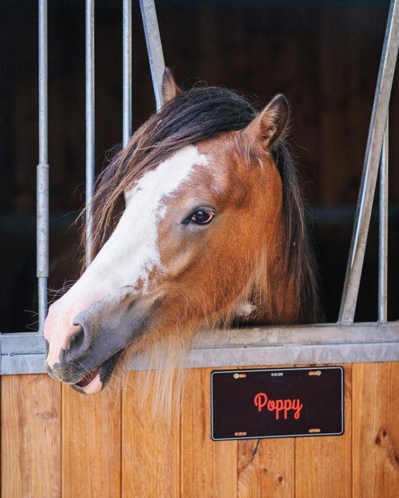 idee photo animal de compagnie : Plaque de porte personnalisée pour un box de cheval, smartphoto - création et photo de  @tinker_leentje_molly_poppy et @linaheirwegh sur instagram