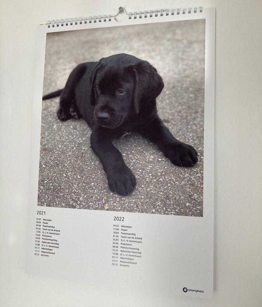 idee photo animal de compagnie  : calendrier de smartphoto par  @vicotheblacklab