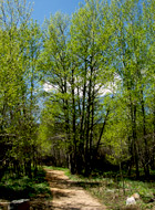 Summer Trail_GSmith