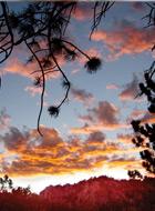 SunsetSkyTrees