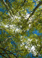UpAspenTrees