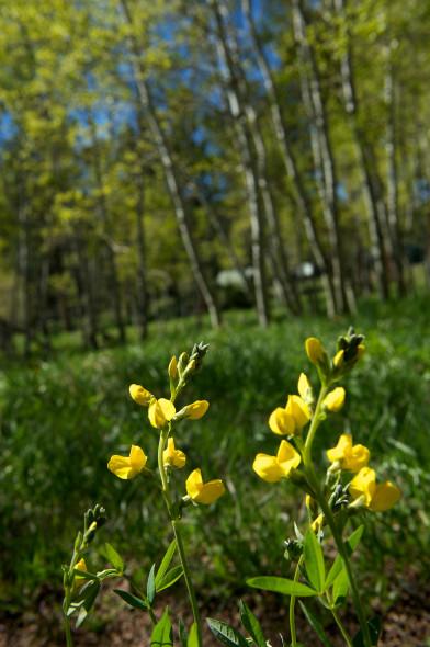 YellowWildflowers