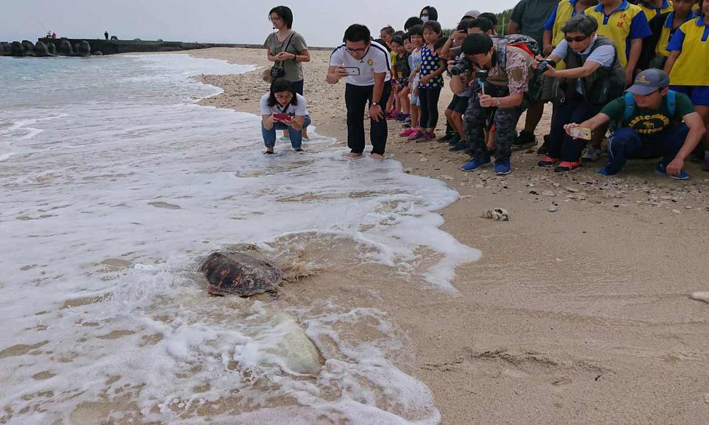 小琉球沙灘野放小海龜「阿貴」,重回大海故鄉的懷抱