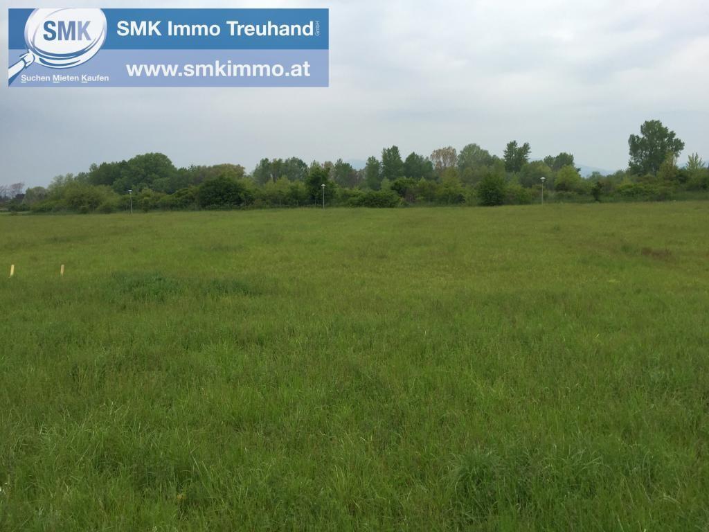 Grundstück Kauf Niederösterreich Baden Teesdorf 2417/6618  1