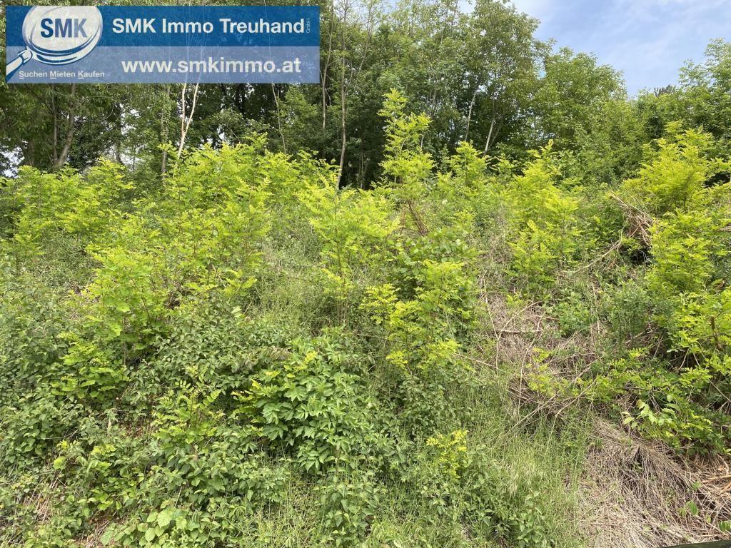 Grundstück Kauf Niederösterreich Wiener Neustadt Land Brunn bei Pitten 2417/7301  5 Grundstück