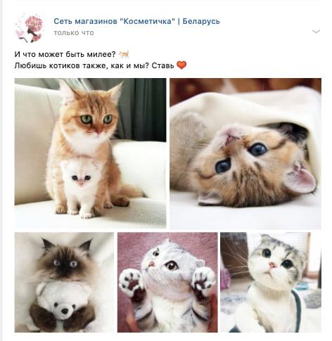 пост с котиками