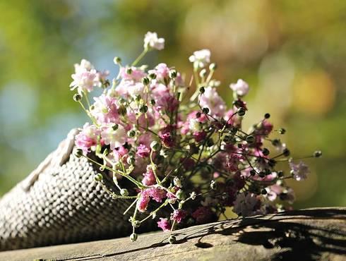Bag gypsofilia seeds 1716655 960 720(1)