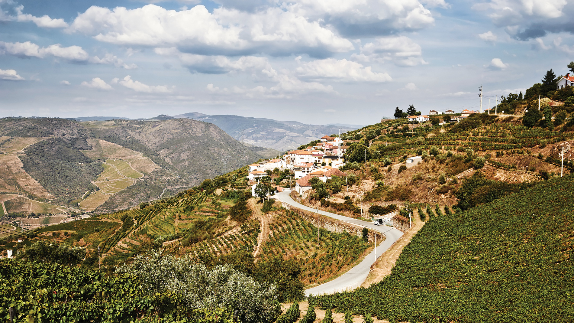 wines from portugal are boosting in popularity around saint louis
