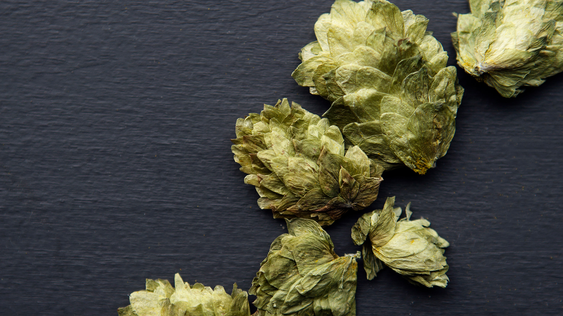 When hops are added at the beginning or middle of the boiling stage of brewing, they add a lot of bitterness.