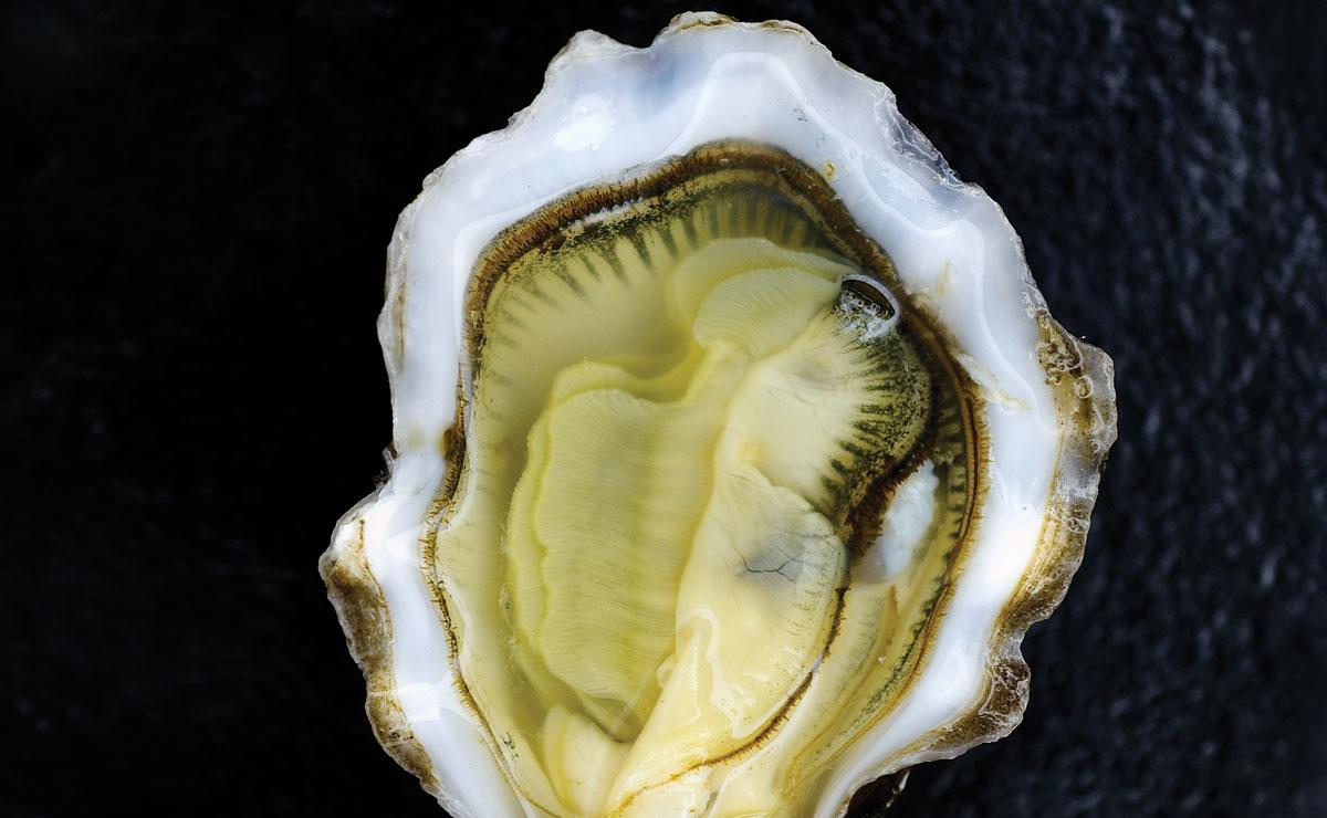 Cielo's Kumamoto Oysters With Apple Gelée