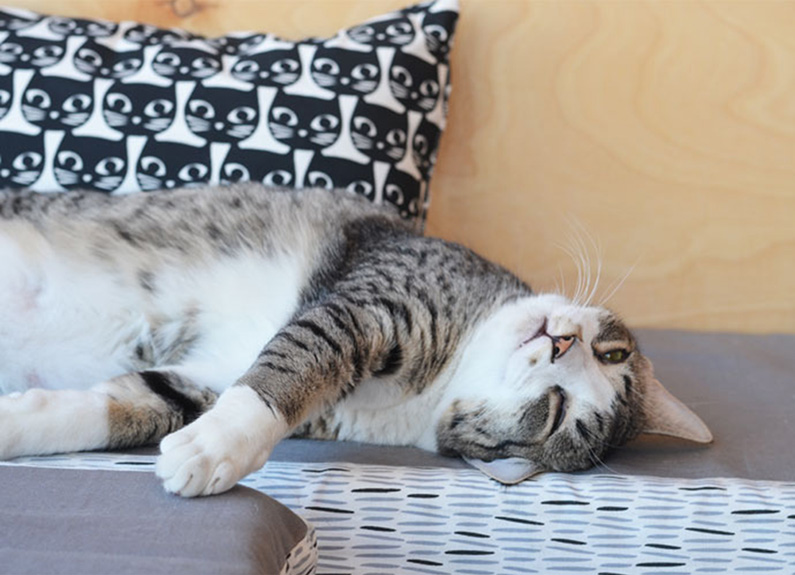 a cat lounges on the couch at mauhaus cat cafe & lounge