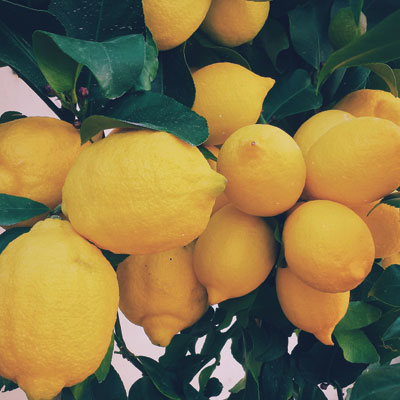 Union Loafer's Lemon Vinaigrette