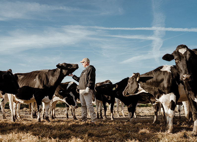 a man standing in a field with cows