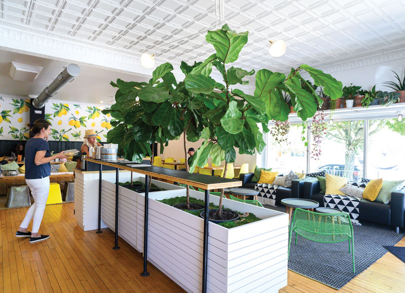 a bright sunny cafe dining room with lemon wallpapers and large green plants