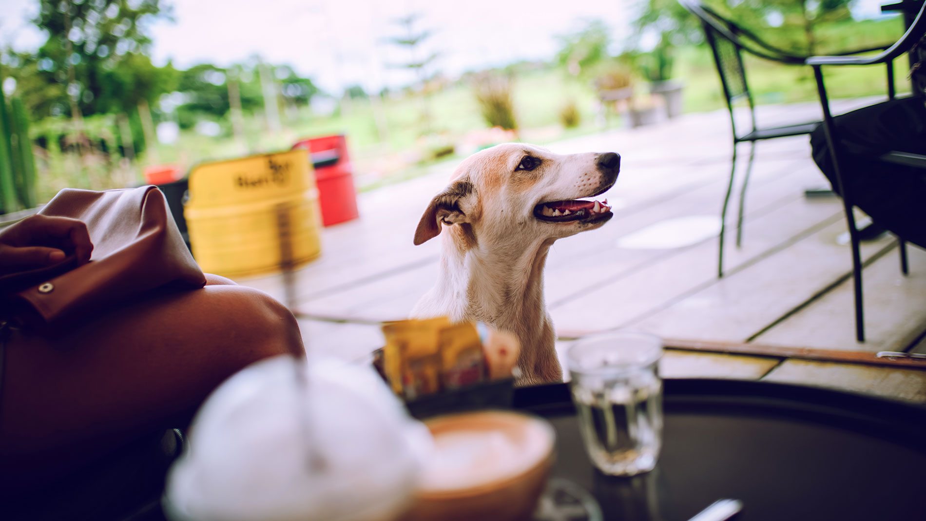dog-friendly restaurants and bars in st. louis