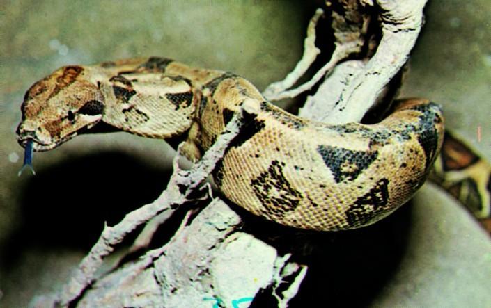 Standard slanger1