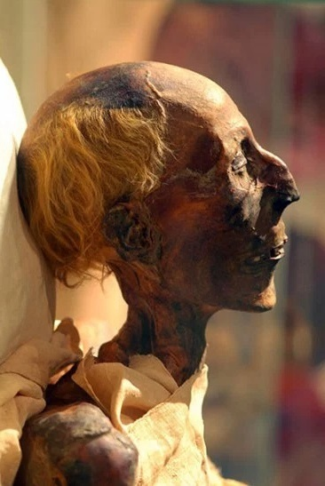 Standard ramesses ii mummy in profile  colored picture